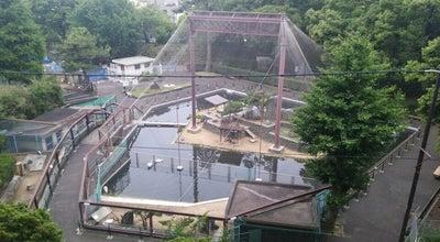 Photo of Zoo 和歌山公園動物園 at 一番丁3, 和歌山市 640-8146, Japan