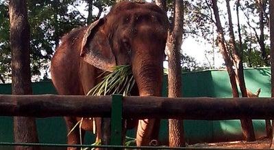 Photo of Zoo Bosque Fábio Barreto at R. Liberdade, S/n, Ribeirão Preto 14015-000, Brazil
