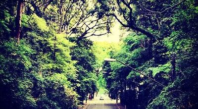 Photo of Park Parque Tenente Siqueira Campos (Trianon) at R. Peixoto Gomide, 949, São Paulo 01309-001, Brazil