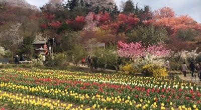 Photo of Park 花見山 at 福島市, Japan
