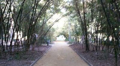 Photo of Park Parque García Sanabria at C. Mendez Nuñez, Santa Cruz de Tenerife 38004, Spain