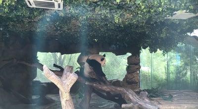 Photo of Park Chimelong Safari Park 长隆野生动物世界 at China