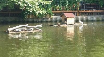"Photo of Lake парк ""Йордан Капсамунов"" /Езерото/ at Bulgaria"