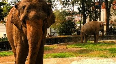 Photo of Zoo Parque Zoológico Municipal Quinzinho de Barros at Rua Teodoro Kaisel, 18.021, Sorocaba, Brazil