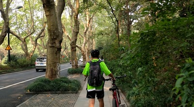 Photo of Lake 杨公堤 Yang Causeway at 西湖区西湖西线北山路南山路间, 杭州, 中国, China