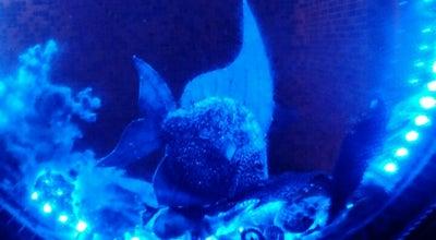 Photo of Aquarium Майами Бис at Никитина 98/1, Новосибирск, Russia