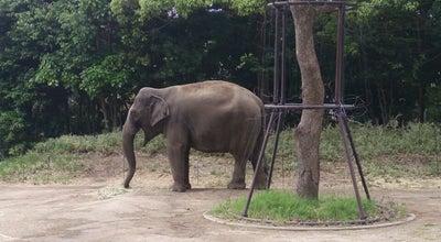 Photo of Zoo よこはま動物園 ズーラシア at 旭区上白根町1175-1, 横浜市 241-0001, Japan