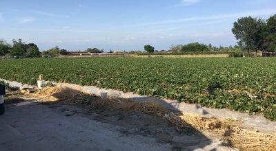 Photo of Farmers Market Strawberry Stand at Ferguson, Visalia, CA 93291, United States