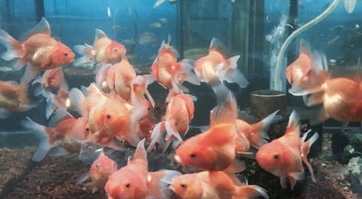 Photo of Aquarium Sentosa Jaya Aquarium at Desa Sri Putra, Wakaf Bharu, Malaysia