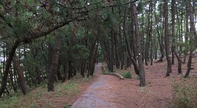 Photo of Trail 鎌ケ崎遊歩道 at 三保, 清水区, Japan