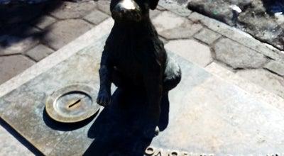 Photo of Monument / Landmark Памятник бездомной собаке at Пл. Единства И Согласия, Tyumen, Russia