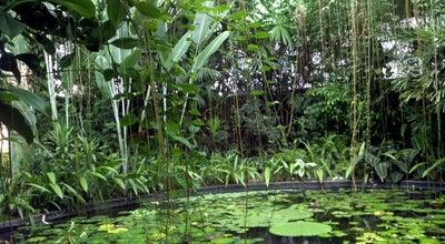Photo of Botanical Garden Jardín Botánico José Celestino Mutis at Av. Calle 63 No. 68-95, Bogotá, Colombia