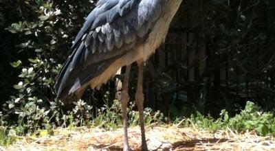 Photo of Zoo 千葉市動物公園 at 若葉区源町280, Chiba 264-0037, Japan