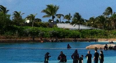 Photo of Zoo Dolphin Cay @ Atlantis at Paradise Island, Bahamas