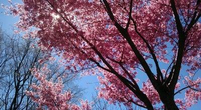 Photo of Playground Pierce Park at Harvard Avenue, Brookline, MA 02446, United States
