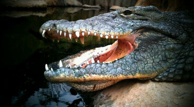 Photo of Arts and Entertainment Krokodillenrivier at Diergaarde Blijdorp, Rotterdam, Netherlands