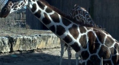 Photo of Zoo Sedgwick County Zoo at 5555 W Zoo Blvd, Wichita, KS 67212, United States