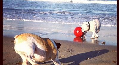 Photo of Dog Run Ocean Beach Dog Beach at Voltaire St., San Diego, CA 92107, United States