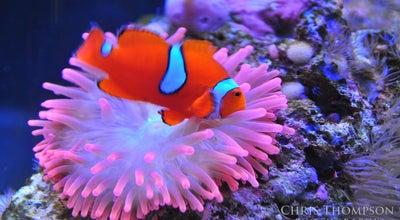 Photo of Aquarium Newport Aquarium at 1 Aquarium Way, Newport, KY 41071, United States