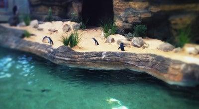 Photo of Aquarium Manly Sea Life Sanctuary at West Esplanade, Manly, NS 2095, Australia