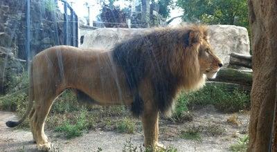 Photo of Zoo Zoo at Tiergartenstr. 1, Dresden 01219, Germany