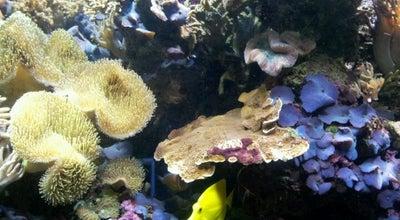 Photo of Aquarium National Sea Life Centre at The Waters Edge, Birmingham B1 2HL, United Kingdom