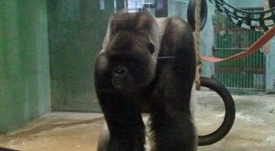 Photo of Zoo Gorillaverblijf at Diergaarde Blijdorp, Rotterdam 3041 JG, Netherlands