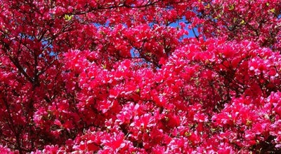 Photo of Park 小室山公園 at 川奈1260-1, Itō 414-0044, Japan
