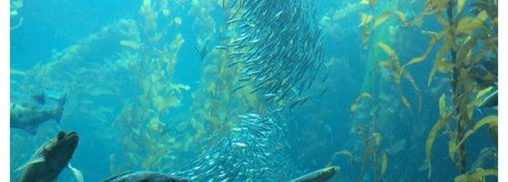 Monterey Bay Aquarium Cannery Row 370 Tips