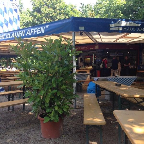 Blauer Affe Bonn