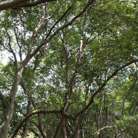 Hutan mangrove pik - Beach in Jakarta utara