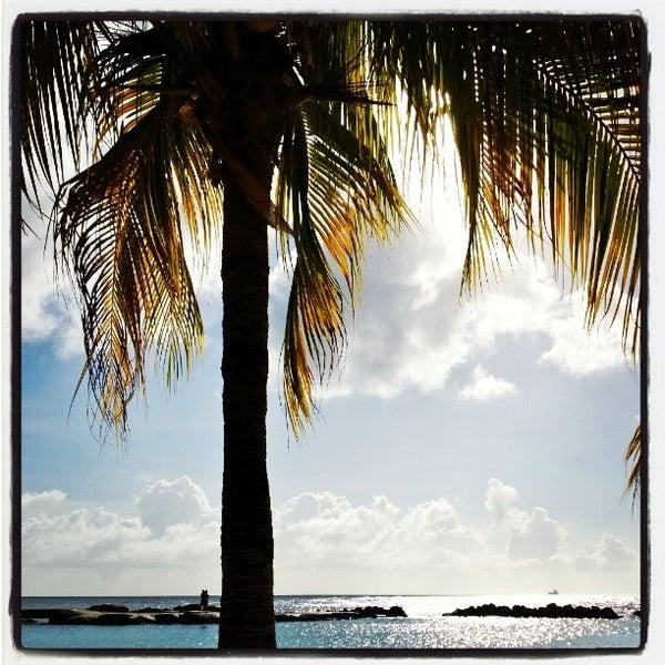 Seaquarium Beach Curacao Reviews