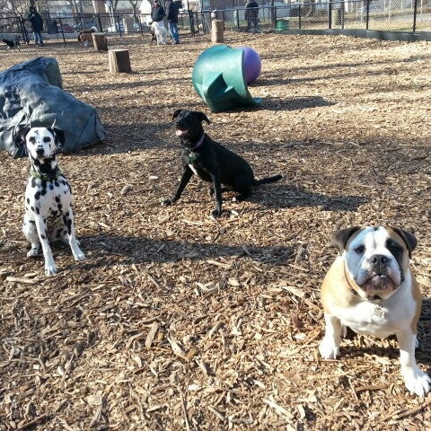 Photo taken at Cunningham Park Dog Run by Christina W. on 2/22/2013