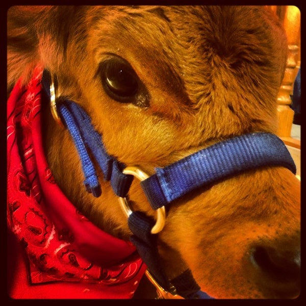 Photo taken at Amon G. Carter Jr. Exhibits Hall by Fort Worth Stock Show on 2/7/2013