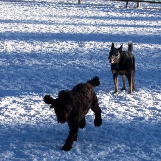 Photo taken at Carter Dog Park by Melissa R. on 12/22/2012