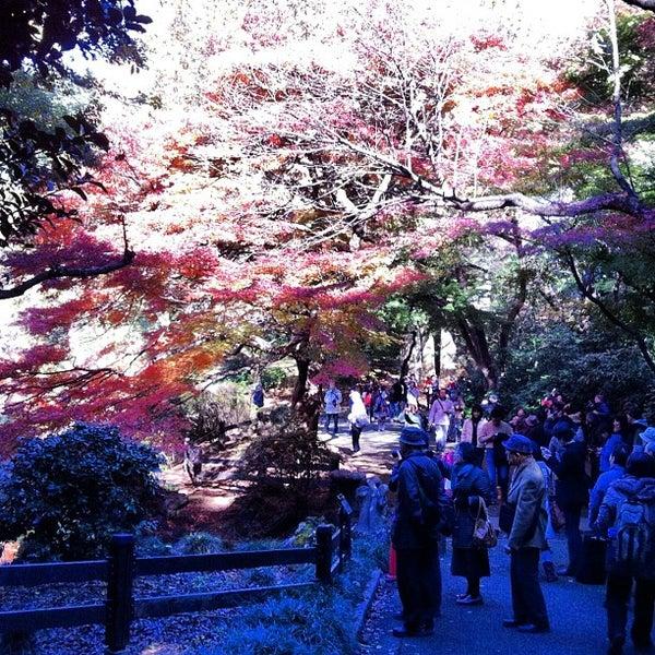 Photo taken at 新宿御苑 (Shinjuku Gyoen) by Shuichi M. on 11/25/2012