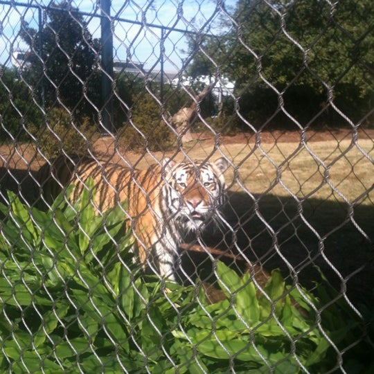 Photo taken at LSU - Mike's Habitat by Andrea B. on 11/22/2012