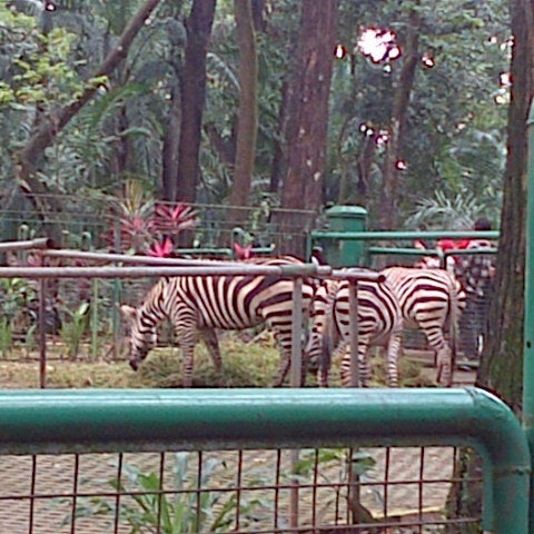 Photo taken at Kebun Binatang Ragunan by dafa a. on 2/3/2013
