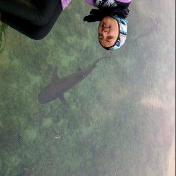 Photo taken at Penangkaran ikan hiu by @realiners on 11/23/2011