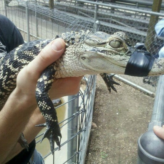Photo taken at Reptile Gardens by Ben L. on 6/11/2011