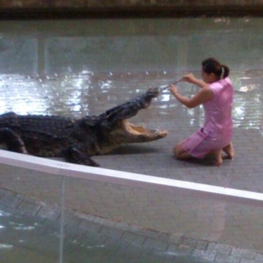 Photo taken at สวนสัตว์เปิดเขาเขียว (Khao Kheow Open Zoo) by Mister A on 2/1/2013
