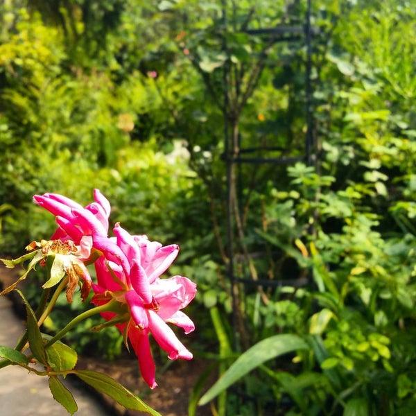 Photo taken at The Garden at St. Luke in the Fields by Ragnarok N. on 9/13/2016