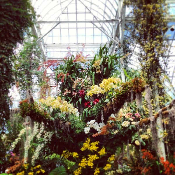 The Orchid Show At New York Botanical Gardens Garden In Bronx