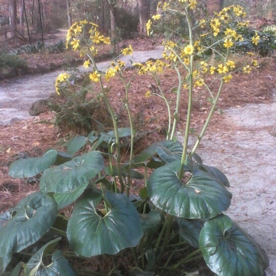 Photo taken at Cape Fear Botanical Garden by Thomas P. on 12/10/2012