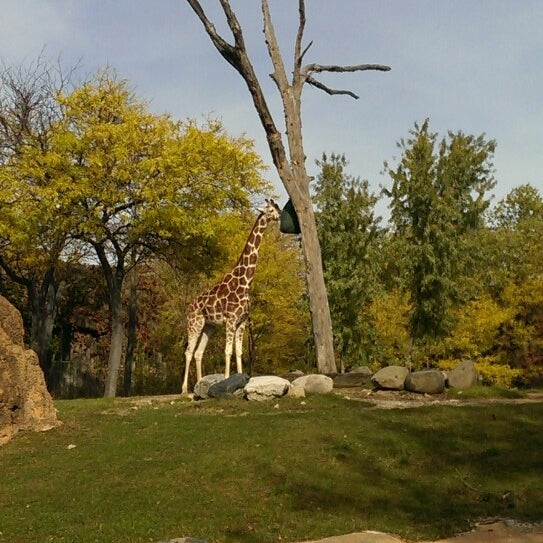 Photo taken at Lincoln Park Zoo by Yimian W. on 10/19/2014