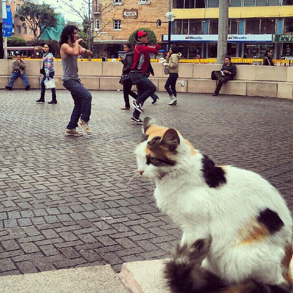People watching, cats, hip hop dancers, snacks and free WiFi. Holler!