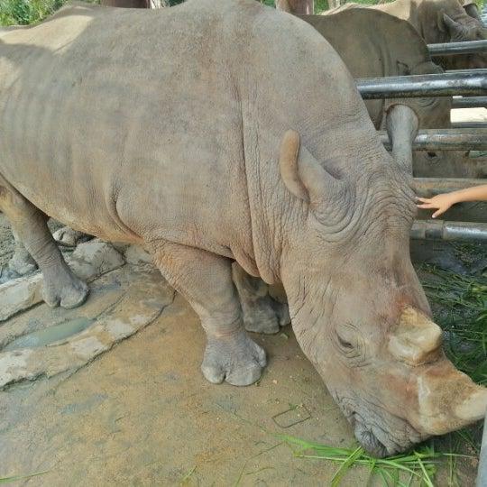 Photo taken at Khao Kheow Open Zoo by Aleksandr S. on 10/28/2012