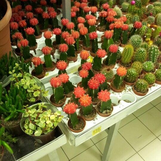 Купить дешево комнатные растения комнатные цветы в