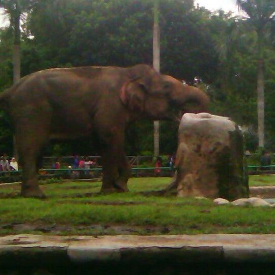 Photo taken at Kebun Binatang Ragunan by Jamot T. on 11/25/2012