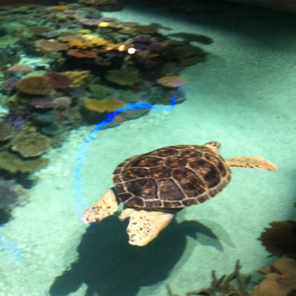 Photo taken at National Aquarium by De' D. on 7/2/2013